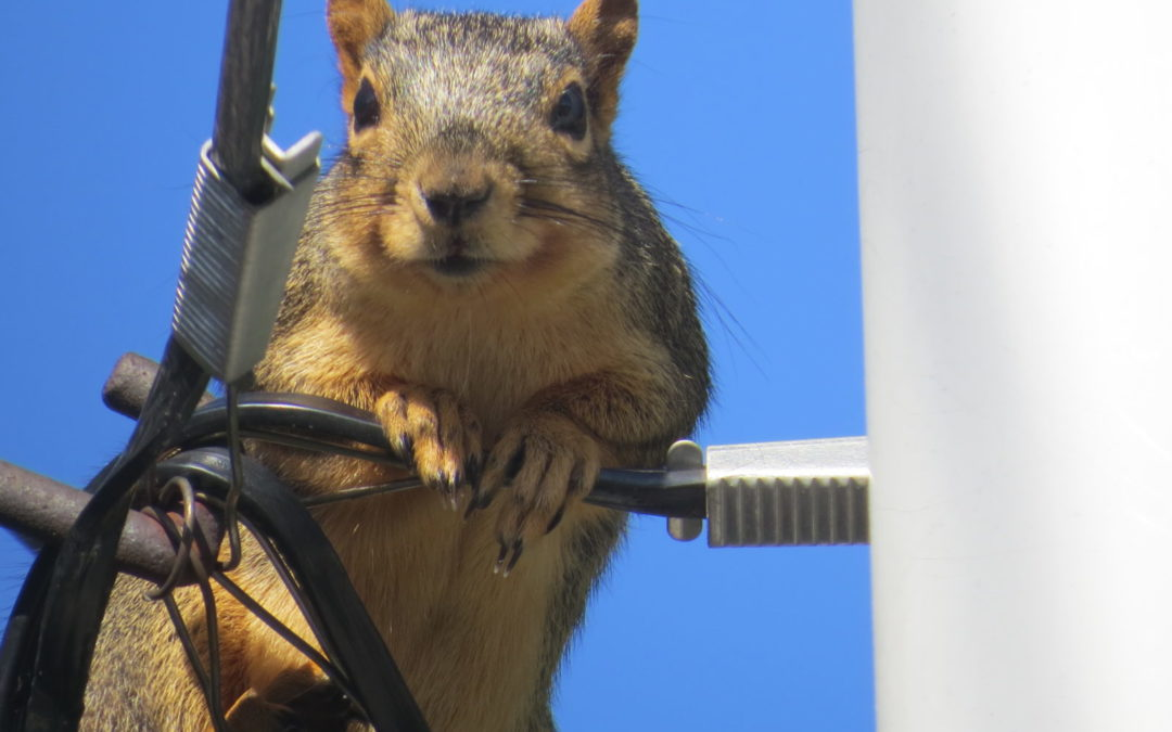 Pittsburgh Squirrel Removal
